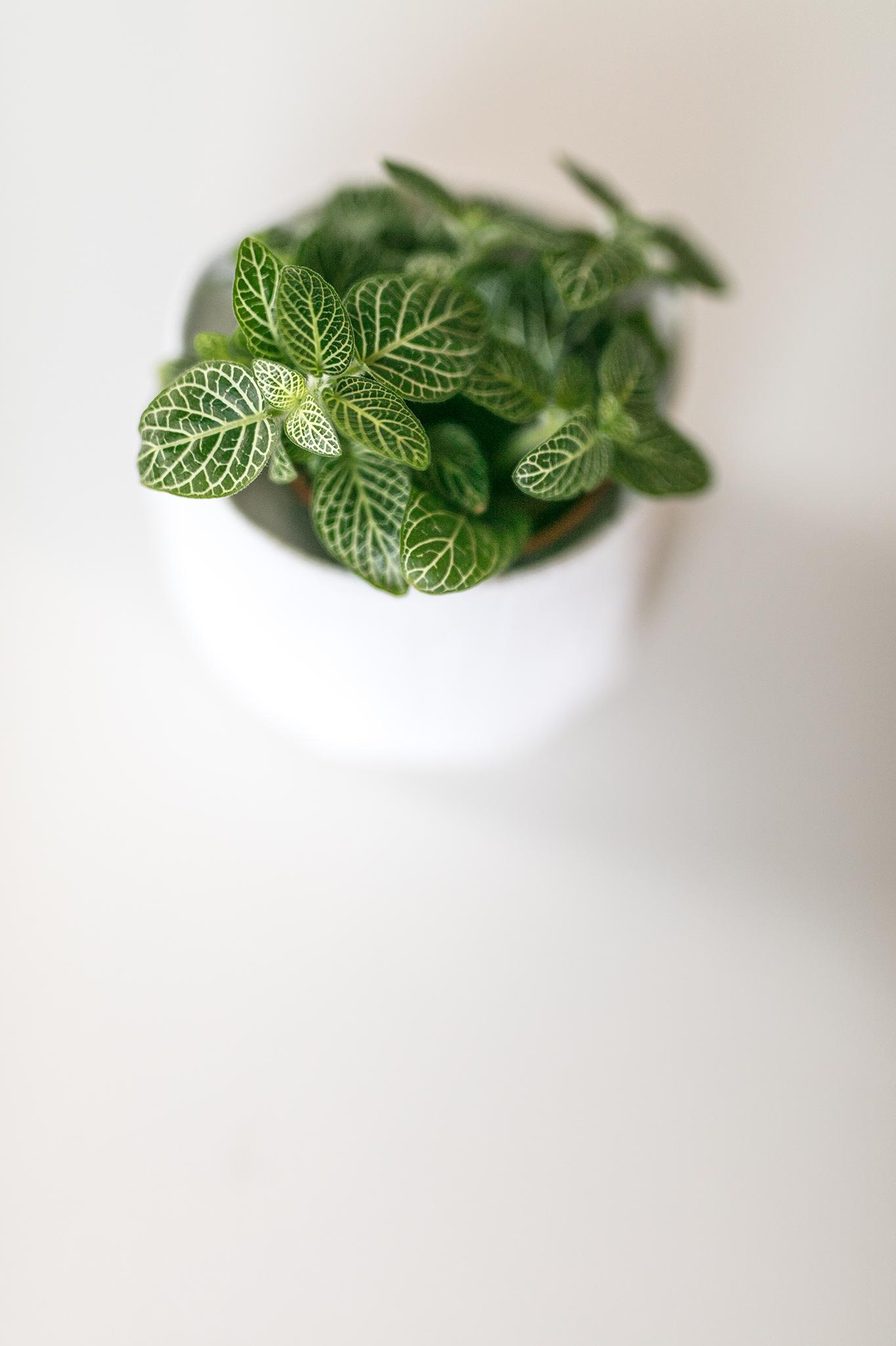 Agencer plusieurs cadres de végétaux