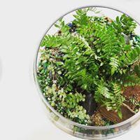 Terrarium- plantes tropicales